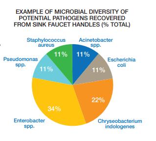 sink faucet handle pathogens
